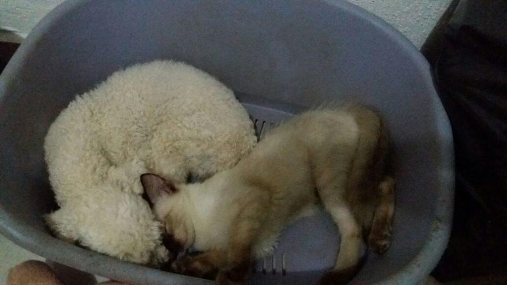 perro y gato durmiendo guntos