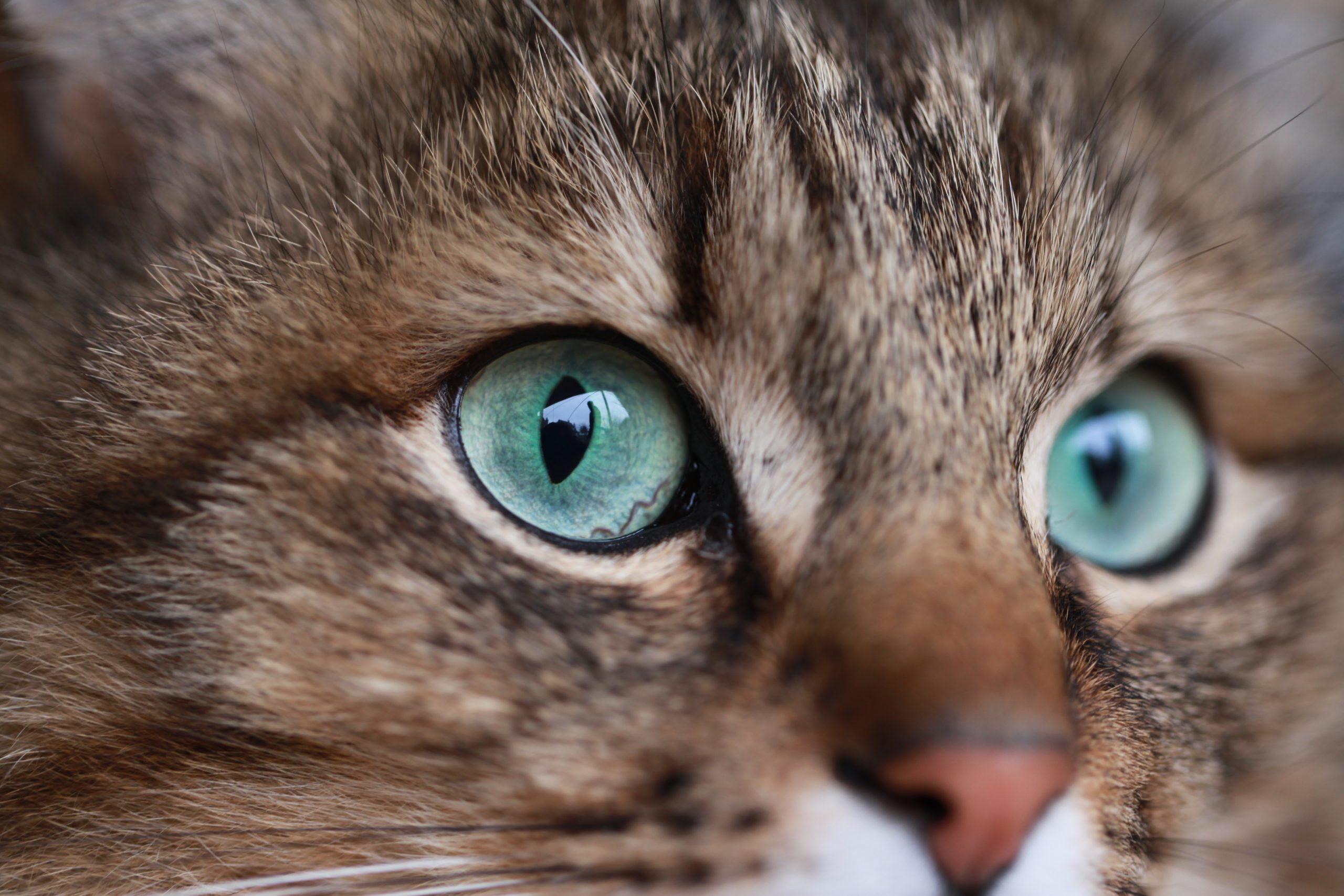 Conoce los Alimentos prohibidos para la salud de los gatos