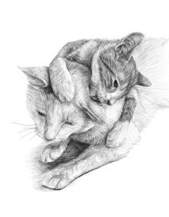 Comida gatos. Pienso para gatos
