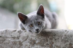 ¿Qué es lo que más odian los gatos?