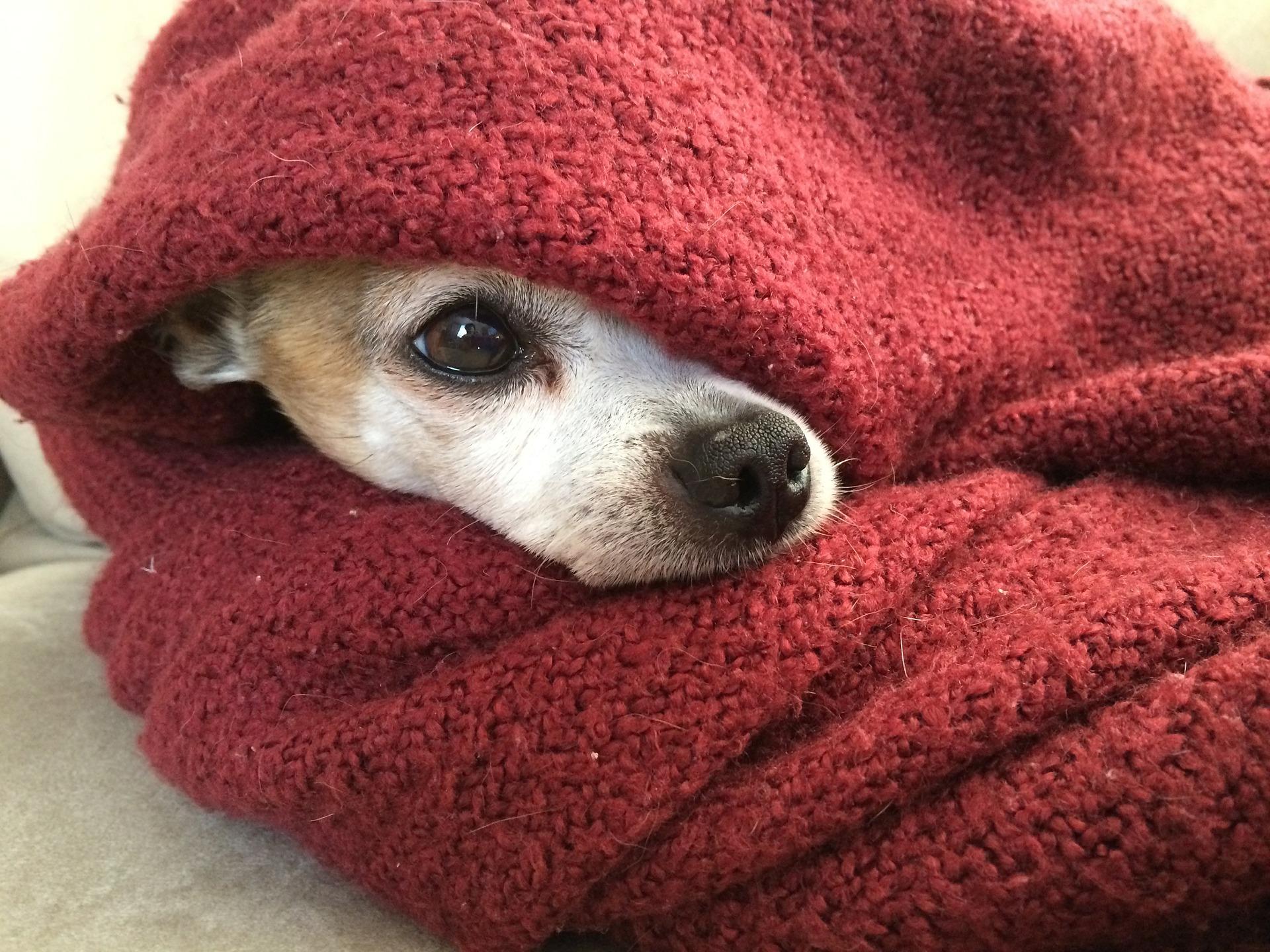 tapar a los perros para dormir