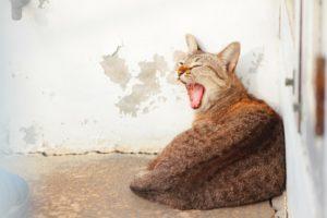 Olores que odian los gatos