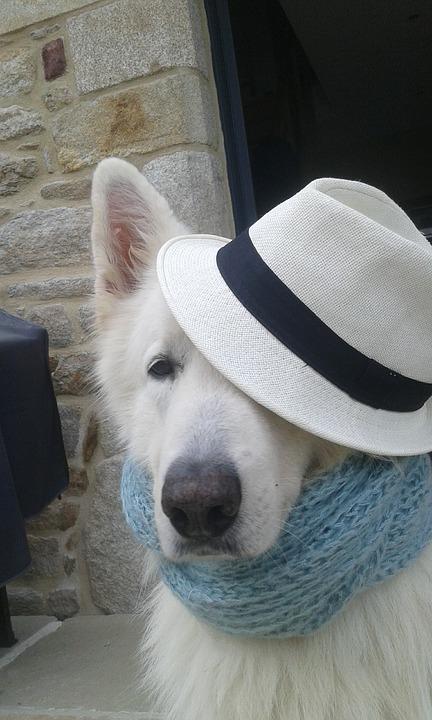 Perro con sombrero