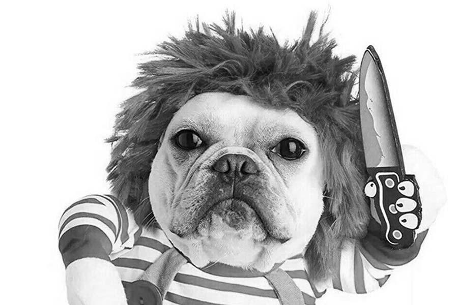 humanizar-perro