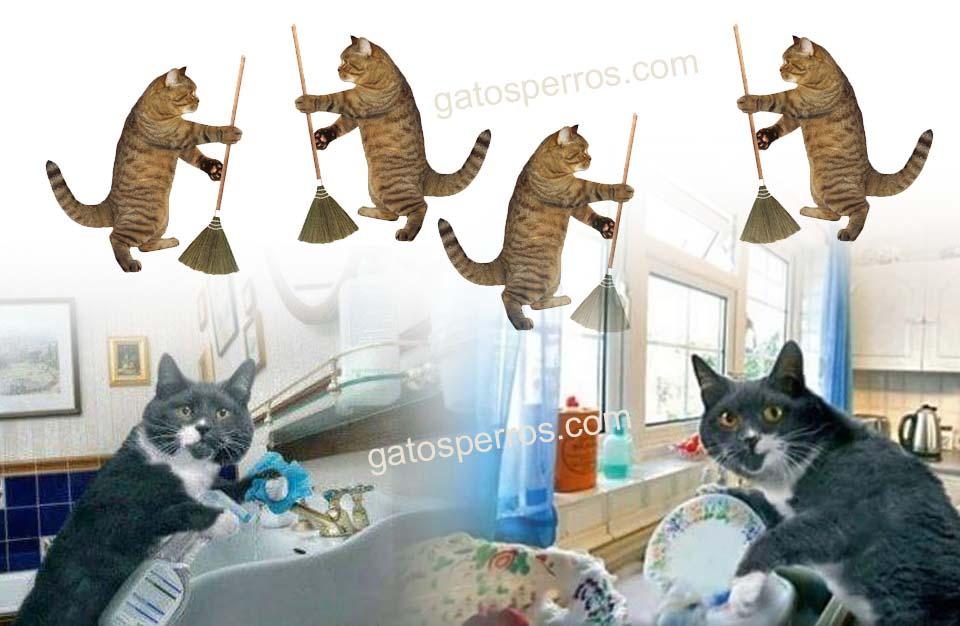 limpiadores no tóxicos para gatos