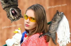 Productos tóxicos para gatos